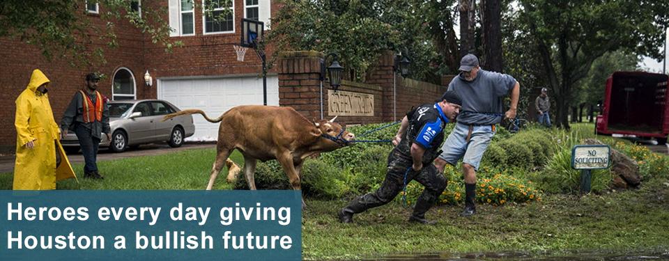 Hurricane Harvey - Removing the bull